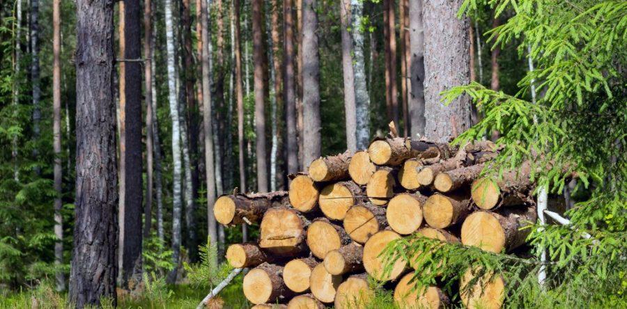 Un chauffage écologique avec les poêles à bois