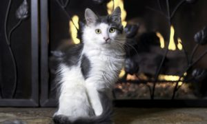 5 conseils pour sécuriser votre foyer pour les enfants et les animaux domestiques