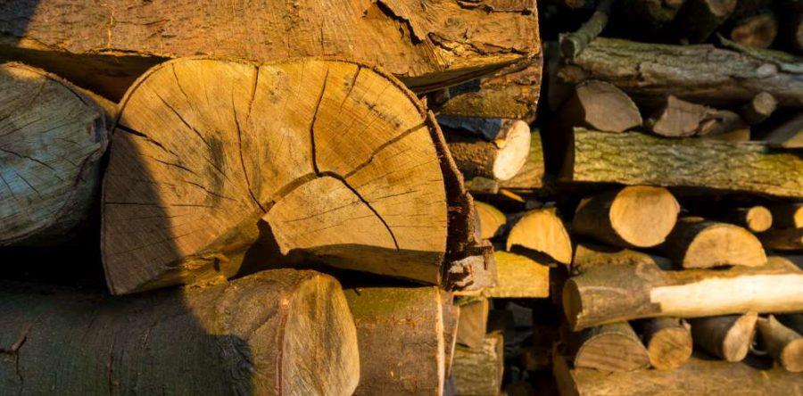 Quel type de bois brûle le mieux?